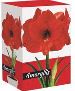 Holiday Plant Bulb Kit